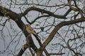 Jay bird in springtime Royalty Free Stock Photo