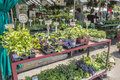 Jean-Talon Market Royalty Free Stock Photo
