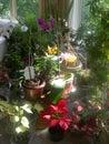 Jeanette's indoor garden Stock Photography