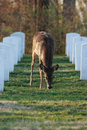 Jefferson_Barracks_Cemetery_2012_088