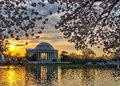 Jefferson memorial e cherry blossoms ad alba Fotografie Stock Libere da Diritti