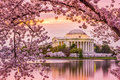 Jefferson memorial in spring washington dc at the tidal basin and during the cherry blossom season Royalty Free Stock Images