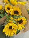 Yellow sunflowers from the market Royalty Free Stock Photo