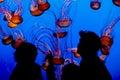 Jelly fish monterey bay aqarium california usa Royalty Free Stock Photography