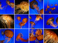 Jellyfish collage Royalty Free Stock Photography