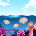 Jellyfish swimming in the ocean Royalty Free Stock Photo
