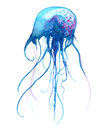 Jellyfish watercolor illustration. Painted medusa isolated on white background, underwater wildlife. Royalty Free Stock Photo
