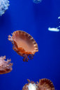Jellyfish in wuhan polar region ocean world this picture was taken it is Stock Images