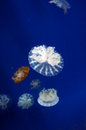 Jellyfish in wuhan polar region ocean world this picture was taken it is Stock Photos