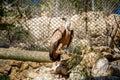 The Griffon vulture, Jerusalem Biblical Zoo in Israel
