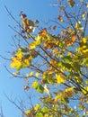 Jesieni przybycie Fotografia Royalty Free
