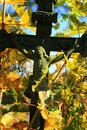 Jesus on the old village cemetery czech republic in colorful autumn nature from Stock Photography