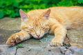 Jeune kitten sleeping rouge Photographie stock libre de droits