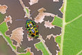 Jewel bug or metallic shield bug on the degraded leaf Royalty Free Stock Images