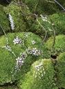 Jewelery on green foliage Stock Photos