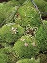 Jewellery on green foliage Stock Photo