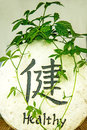 Jiaogulan herb of longevity chinese Royalty Free Stock Photography