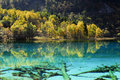 Jiuzhaigou autumn tree and lake in sichuan china Stock Photography