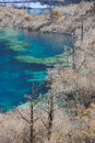 Jiuzhaigou lakes winter sichuan china Royalty Free Stock Image