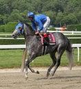 Jockey John Velazquez and Paraiba Stock Image