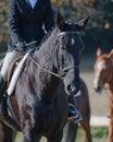 Jockey riding horse Stock Photography