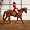 Jockey riding a horse gait Royalty Free Stock Photo