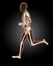 Jogging male medical skeleton d render of a running Stock Images