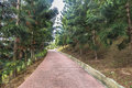 Jogging track at park of pine casuarina tree Stock Photography