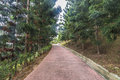 Jogging track at park of pine casuarina tree Stock Image