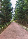 Jogging track at park of pine casuarina tree Royalty Free Stock Images