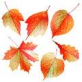 Jogo das folhas de outono coloridas Foto de Stock Royalty Free
