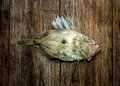 John dory fish on a wooden board Royalty Free Stock Images