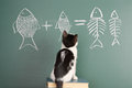 Joke about a cat studying arithmetic Royalty Free Stock Image