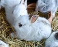 Jong bunny rabbits Stock Foto's