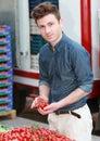 Jonge aantrekkelijke mens die tomaten kiest Royalty-vrije Stock Afbeeldingen