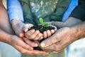Jonge plant in handen Royalty-vrije Stock Afbeelding