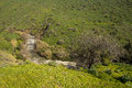 Jordan river israel the north part of before it enter to the sea of galilee Royalty Free Stock Image