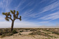 Joshua tree at El Mirage dry lake Royalty Free Stock Image