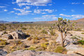 Joshua Tree Forest Royalty Free Stock Images