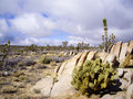 Joshua Tree Forest Royalty Free Stock Image