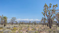 Joshua Tree Forest, Mojave National Preserve, CA Royalty Free Stock Photo