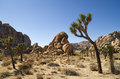 Joshua Tree Landscape Royalty Free Stock Photography