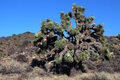 Joshua Tree National Park Royalty Free Stock Image