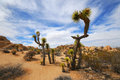 Joshua tree national park california usa Royalty Free Stock Images