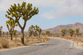 Joshua tree national park empty road at california Royalty Free Stock Images