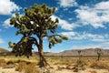 Joshua Tree National Park, Mojave Desert, California, USA Royalty Free Stock Photo