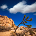 Joshua tree national park yucca valley mohave desert california intersection rock in usa Royalty Free Stock Photo