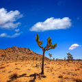 Joshua tree national park yucca valley mohave desert california in usa Stock Photography