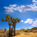 Joshua tree national park yucca valley mohave desert california in usa Stock Image