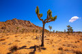 Joshua tree national park yucca valley mohave desert california in usa Stock Images